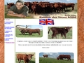 Elevage de vaches salers et vente - Salers breeding
